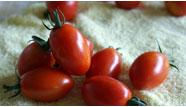 carousel_tomato